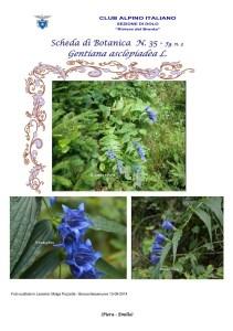 Scheda di Botanica n. 35 Gentiana asclepiadea 3 - Piera, Emilio