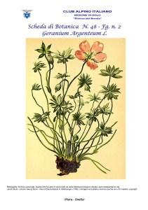 Scheda di Botanica n. 48 Geranium argenteum fg. 2 - Piera, Emilio