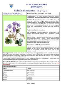 Hepatica nobilis fg. 1