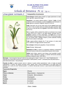 Leucojum vernum fg. 1