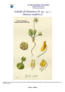 Scheda di Botanica n. 54 Moneses uniflora fg. 2 - Piera, Emilio