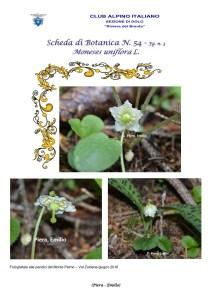 Scheda di Botanica n. 54 Moneses uniflora fg. 3 - Piera, Emilio