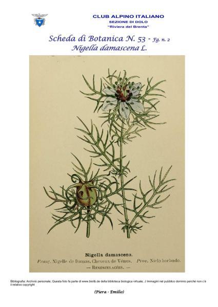 Scheda di Botanica N. 53 Nigella damascena fg. 2 - Piera, Emilio