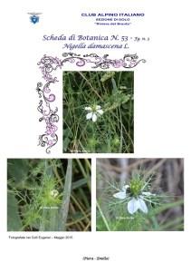 Scheda di Botanica N. 53 Nigella damascena fg. 3 - Piera, Emilio