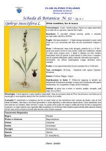 Scheda di Botanica n. 52 Ophrys insectifera fg. 1 -Piera, Emilio