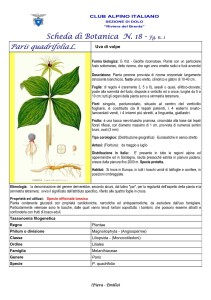 Paris quadrifolia fg. 1
