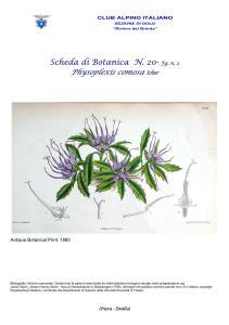 Physoplexis comosa fg. 2