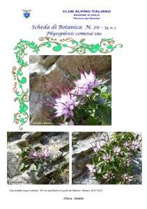 Physoplexis comosa fg. 3