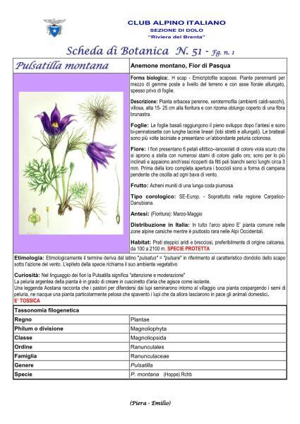 Scheda di Botanica N. 51 Pulsatilla montana fg. 1 - Piera, Emilio