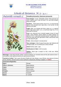 Pulsatilla vernalis fg. 2