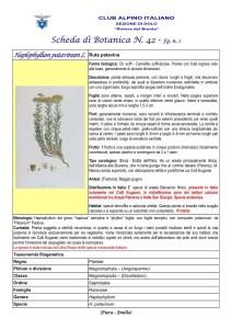SCHEDA N. 42 Haplophyllum patavinum L. fg 1 - Piera, Emilio