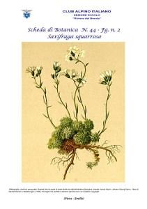 Scheda di Botanica n. 44 Saxifraga squarrosa fg. 2 - Piera, Emilio