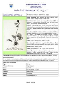 Soldanella alpina fg. 1