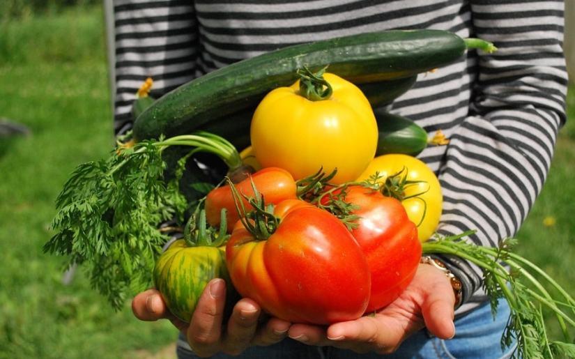 sfaturi pentru o recoltă bogată