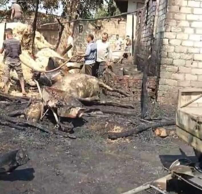 حريق حظيرة مواشي قرية الروضة