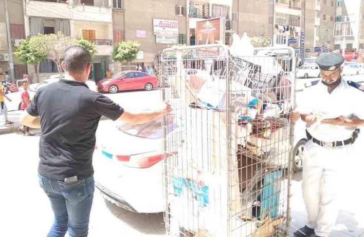 مجلس مدينة كفر الشيخ يشن حملة للقضاء على ظاهرة احتلال الأرصفة