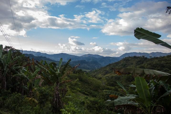 Rainforest, Honduras