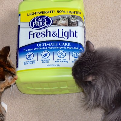 Helping My Cats One Green Jug At A Time