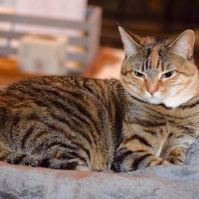 Tips On Finding A New Home For Your Pets