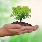 """Preparan actividades para celebrar el """"Día mundial del medio ambiente"""""""