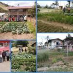 Cajamarca registra el menor porcentaje de anemia a nivel nacional