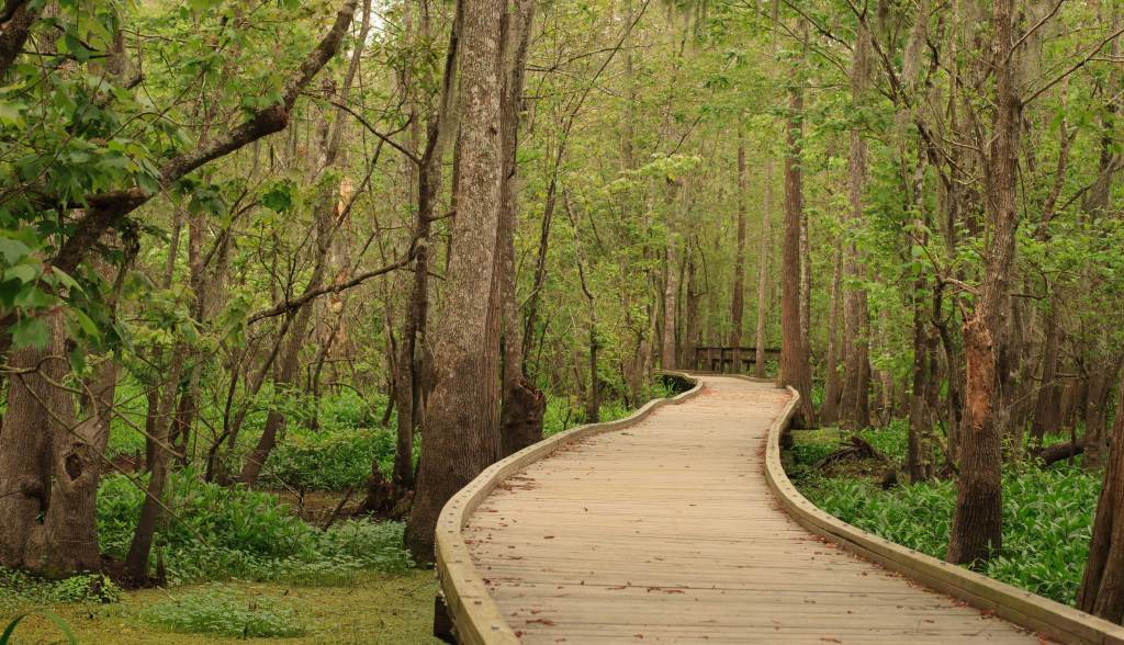 This picture shows a swamp board walk in South Louisiana that Tricia and I visited.