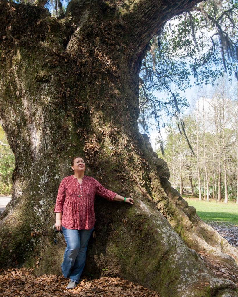 """The Grover Cleveland Oak is really BIG! The girth (circumference) is 24'-8"""". This tree is estimated to be over 300 years old."""