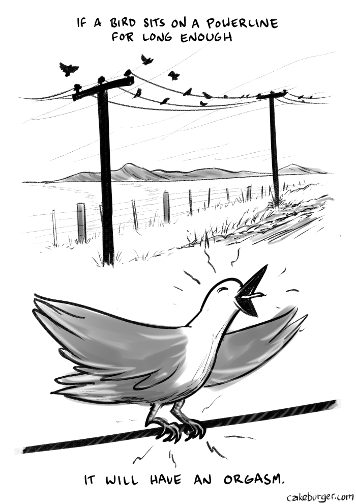 This theory can be confirmed by a simple experiment! First, you will need some birds. They can commonly be found on power lines. Climb on up. After this, you can ask God all about birdgasms.
