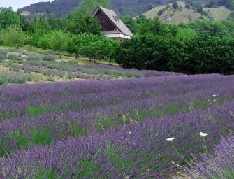 Parco della Lavanda in Calabria, un giardino magico nel cuore del Pollino