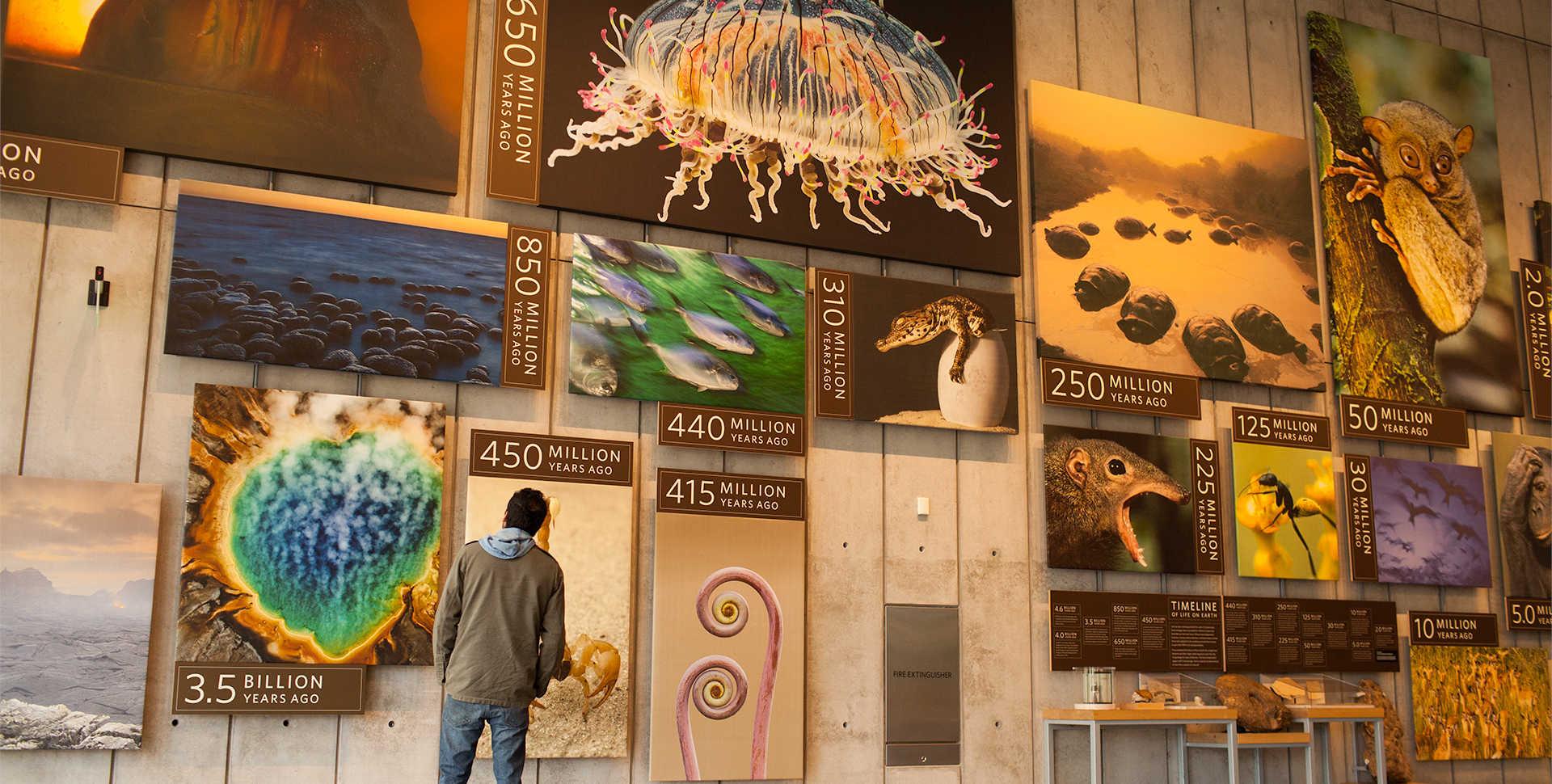 Kimball Natural History Museum California Academy Of
