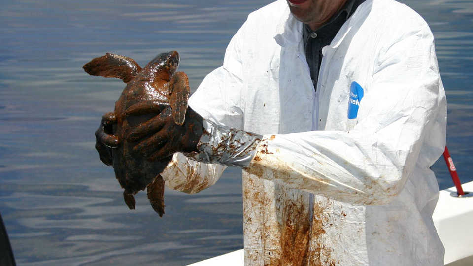 Lesson Plan  Slippery Shores Oil Spill CleanUp