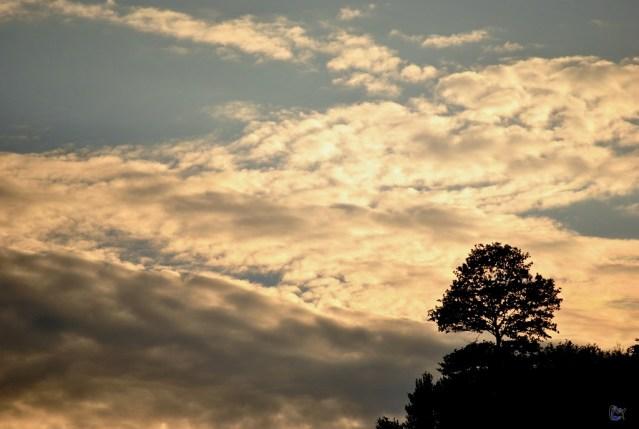 Copacul singuratic