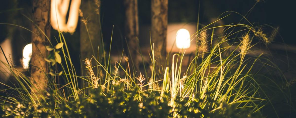 lights in landscaping