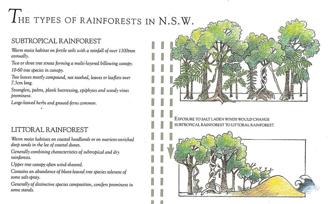 Examples of parasitism in the rainforest include loa loa, candiru, rafflesia, leeches, and the fungus ophiocordyceps unilateralis, among others. Rainforests Caldera Wildscapes