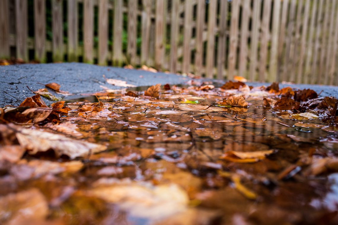 Fall leaves in a puddle of rain water