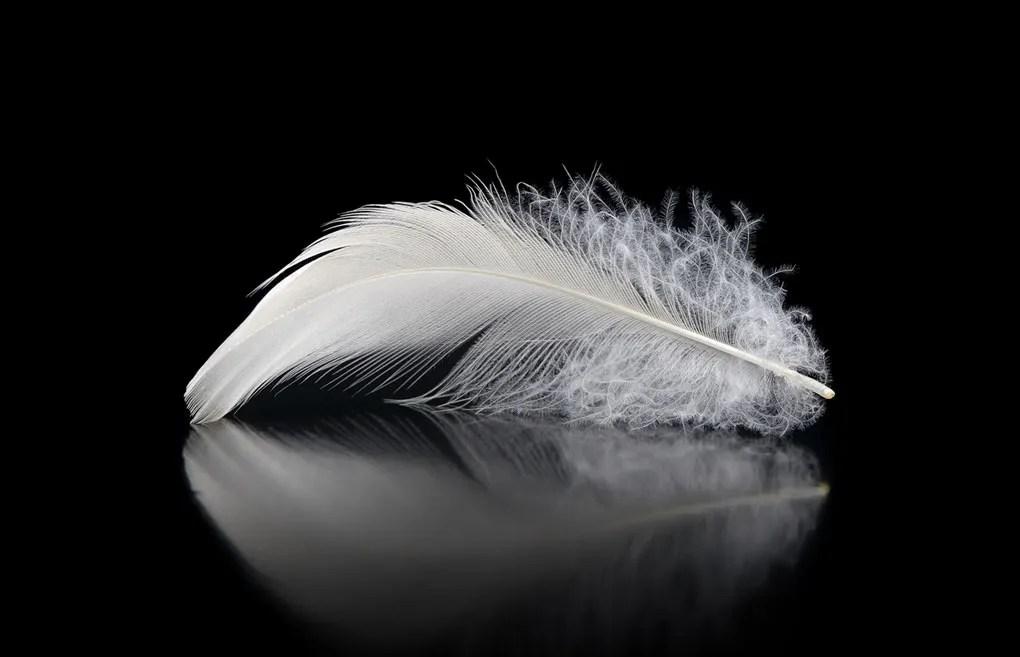 Fiocco di piumino d'oca.nessun'altra fibra naturale racchiude in sé così tanti pregi: Come Lavare Una Trapunta In Piuma Blog Casa Caleffi