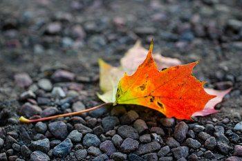 Autumn Falling Leaves Live Wallpaper When Is September Equinox 2019 Amp 2020 Dates Of September