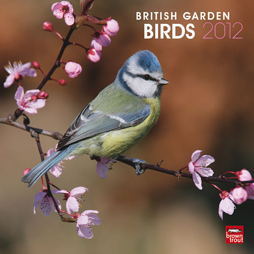 Birds Wall Calendars and Planners 2017