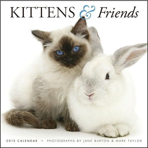 Cute Baby animals, kittens and puppies wall calendars 2017