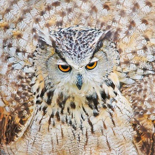 magic-owls-calendar