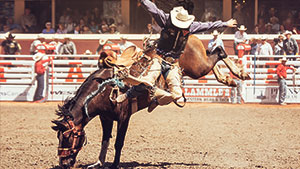 2017 Rodeo Events  Tickets  Calgary Stampede