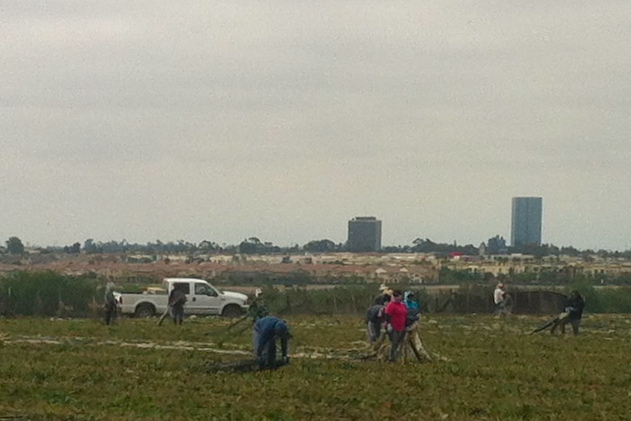With the skyline of downtown Oxnard in the background, farmworkers gather plastic that is used in strawberry fields to contain pesticides. Photo: Hannah Guzik.