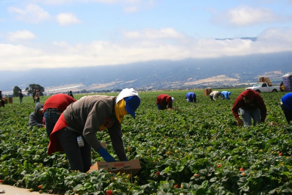Photo of central coast field workers by Lily Dayton/CHR.
