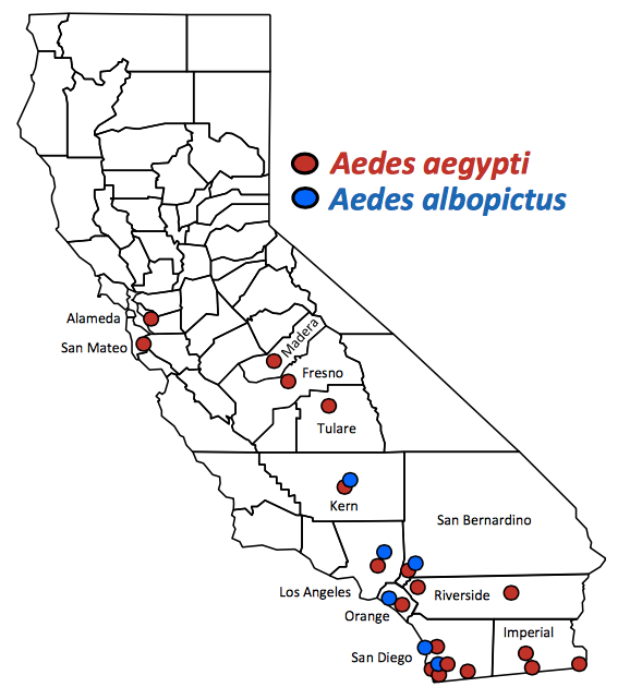 A map from the California Department of Public Health shows where invasive mosquitoes have been found in California. These mosquitoes could theoretically transmit Zika virus.