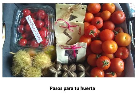 Huerta en casa, una alternativa de agricultura Urbana