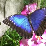 la casa delle farfalle palermo palazzo riso