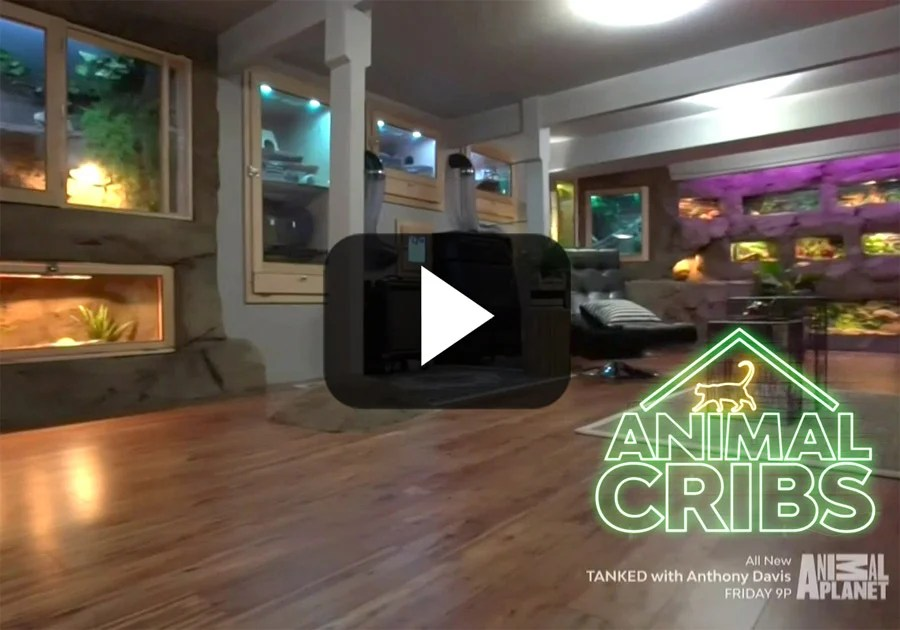 Animal Cribs Episode Eucalyptus Manimal Cave  Cali Bamboo Greenshoots Blog