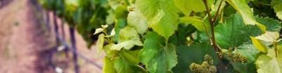 California's Central Coast Wine Country Guide