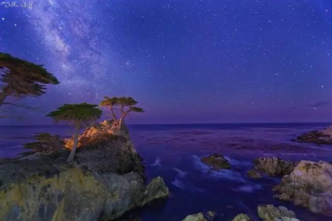 Lone Cypress Tree  California Beaches