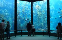 Aquariums In California - Californiabeaches